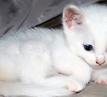 kitten by cynthiab