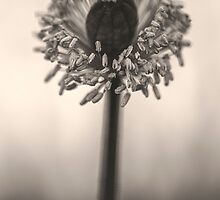 The Search For Anthers by ghd-photography