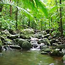 The Daintree Forest by Watertoy