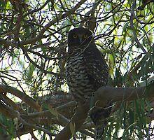Powerful Owl Family 24 by Biggzie