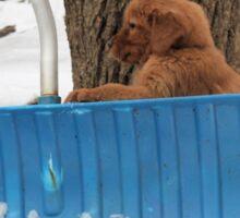 Tucker- Gonna Help Shovel- Solar Babies  Sticker