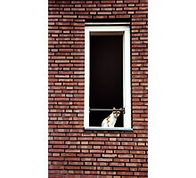 Cat in the Window Photographic Print