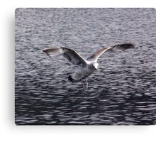 Big Wings Canvas Print