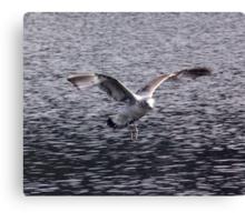 Big Wings Canvas Print