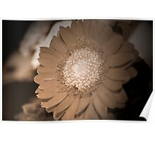 just one  Flower  Poster