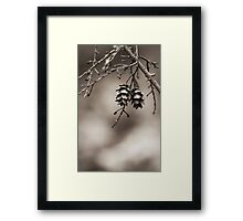 Coniferous Couple Framed Print