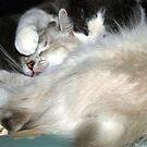 Kitty Cuddles by kimbarose