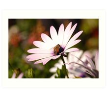 colect my nectar Art Print