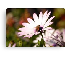colect my nectar Canvas Print