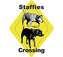 Staffies Crossing Sign Photographic Print