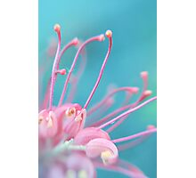 Pink Tangle Photographic Print