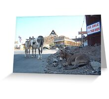 Burros for Sale Greeting Card