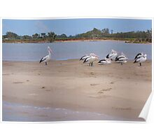 Pelican Island Poster