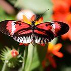 The Piano Butterfly by ZeeZeeshots