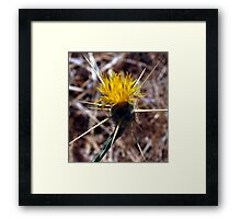 star thistle, California's bane Framed Print