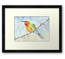 Whitefronted Bee-eater (Merops bullockoides) Framed Print