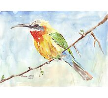 Whitefronted Bee-eater (Merops bullockoides) Photographic Print