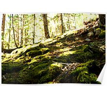 Guanella Pass Forest Poster