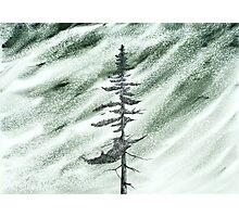 Portrait of an Evergreen in Snowstorm Photographic Print