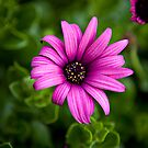 Flower by Sharon Fyfe