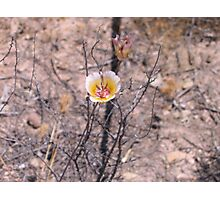 Red Rock Canyon - Wildflower Photographic Print