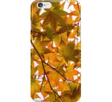 Under the Japanese Maple - Impressions Of Fall iPhone Case/Skin