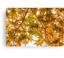Under the Japanese Maple - Impressions Of Fall Canvas Print