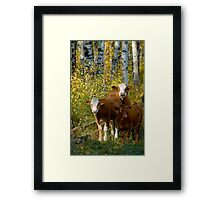 Larry,Curly and Mooo Framed Print