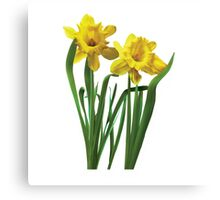 Daffodils At Attention Canvas Print