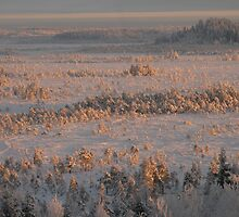 Winterview to swamp of Torronsuo by Petri Volanen