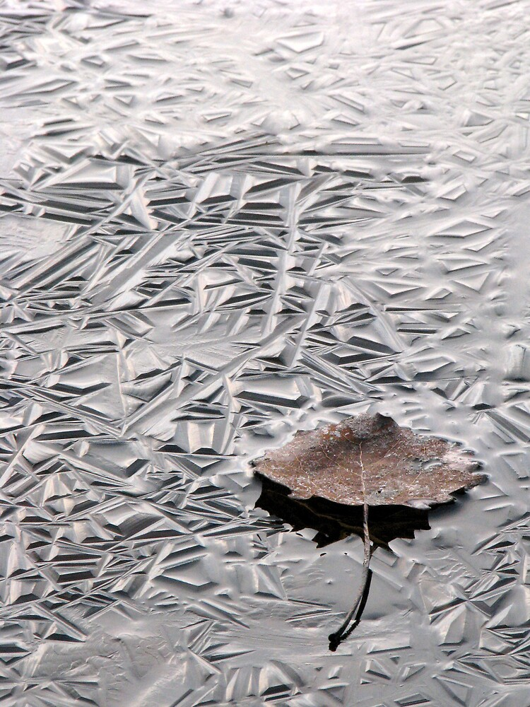 'Ice and leaf' by Petri Volanen