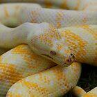 Australian Reptiles III by Steve Bullock
