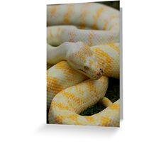 Albino Darwin Carpet Python Greeting Card