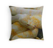 Albino Darwin Carpet Python Throw Pillow