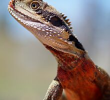 Male Water Dragon by Steve Bullock