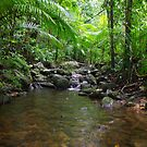 Daintree2 by Watertoy