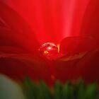 Inner glow by Basia McAuley