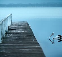 Pelican at Long Jetty by Robert Hoehne