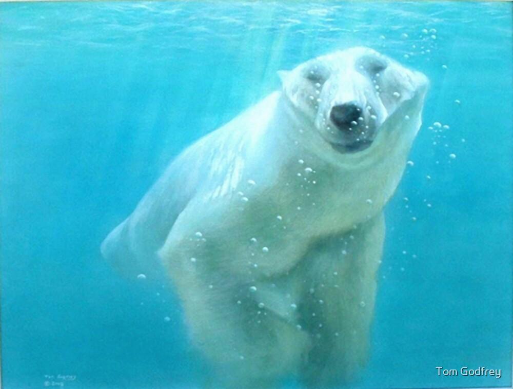 polar bear acrylic by Tom Godfrey