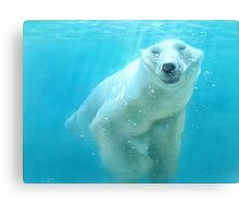polar bear acrylic Canvas Print