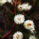 Fabulous flowers calendar by Antanas