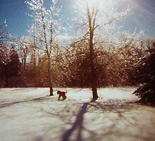 Another Winter, Another Dog by artwhiz47