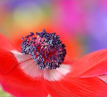 Colours of Nature by Jacky Parker