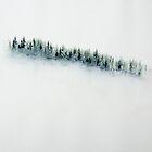Snowfall Evergree Forest by David Hayward