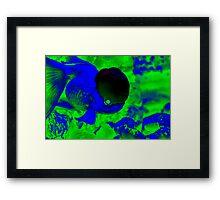 You Smart Little Fishie II Framed Print