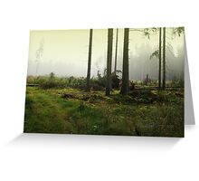Fog in the forest in Sunrise (My forest) Greeting Card