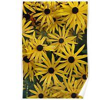 Not A Sunflower Poster