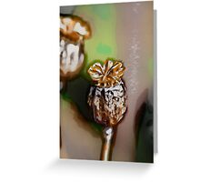 Seed Pods Greeting Card