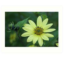 Another Non-Sunflower Flower Art Print