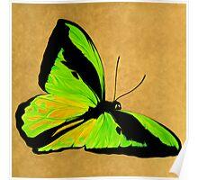 Birdwingbutterfly.jpg Poster